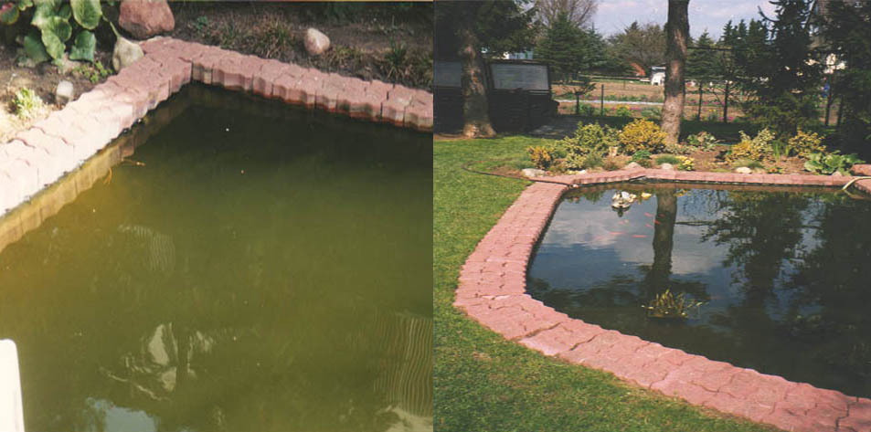 Mischkulturen - Teich-/ Seenrestaurierung, Aquaristik